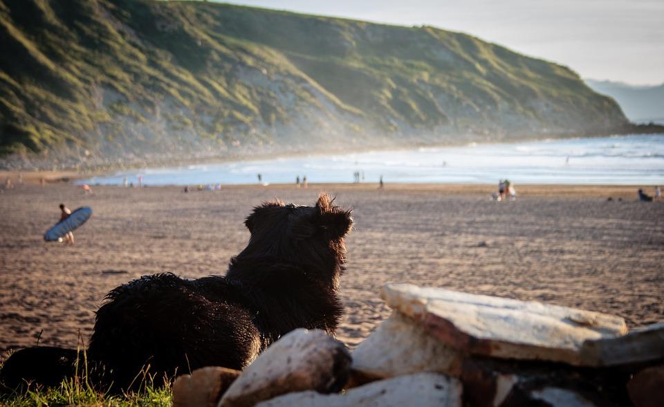 premium selection e16e0 11be2 Surfing in Northern Spain. Den största delen av nationalparken Picos de ...
