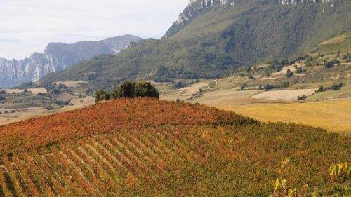 Spanish Wine Trails: Rioja and Ribera del Duero